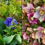 fleurs ljc